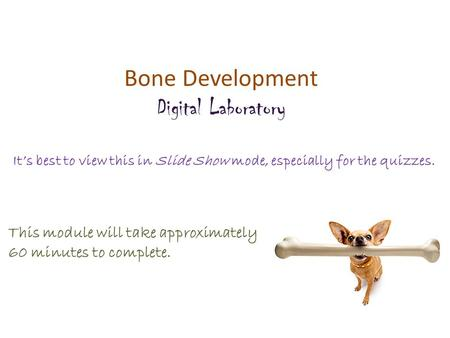 Bone Development Digital Laboratory It's best to view this in Slide Show mode, especially for the quizzes. This module will take approximately 60 minutes.
