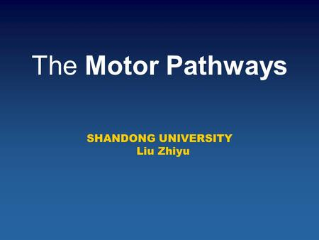 The Motor Pathways SHANDONG UNIVERSITY Liu Zhiyu.