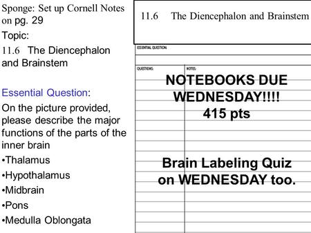 Sponge: Set up Cornell Notes on pg. 29 Topic: 11.6 The Diencephalon and Brainstem Essential Question: On the picture provided, please describe the major.
