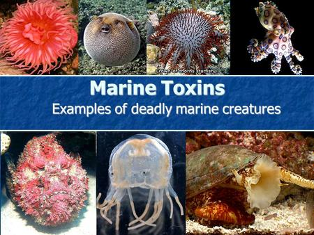 Marine Toxins Examples of deadly marine creatures.