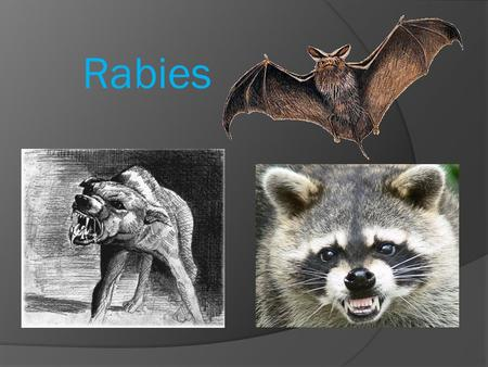 Rabies. What is Rabies  Rabies is a zoonotic disease cause by a rhabdovirus which infects the central nervous tissue and salivary gland often resulting.