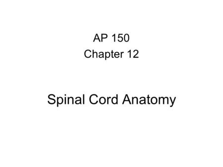 AP 150 Chapter 12 Spinal Cord Anatomy.