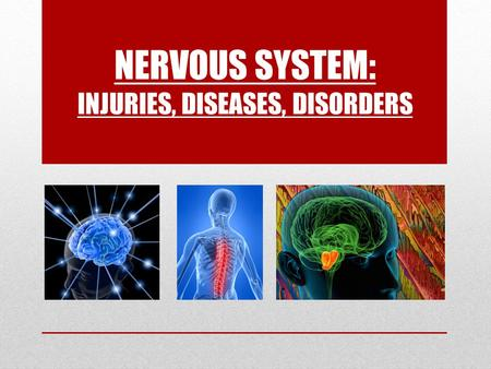 NERVOUS SYSTEM: INJURIES, DISEASES, DISORDERS. Damages to the Reflex Arc & Spinal Cord Injuries  _______, __________ or ______ reflex responses indicate.