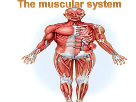 Major structures muscles ------- my/o, myos/o fascia -------- fasci/o tendons ------- ten/o, tend/o, tendin/o.
