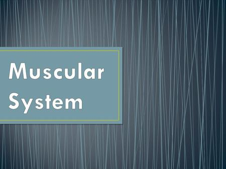 Over 600 muscles make up the muscular system Excitability or irritability: ability to respond to a stimulus such as a nerve impulse.