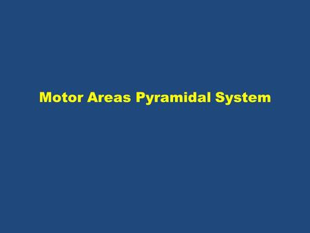 Motor Areas Pyramidal System. Figure 13.11 3 organization of motor subsystems.