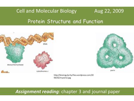 Cell and Molecular Biology Aug 22, 2009 Protein Structure and Function  06/02/myosin2.jpg Assignment reading: