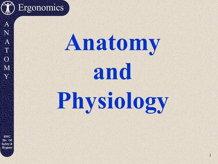 1 Ergonomics ANATOMYANATOMY BWC Div. Of Safety & Hygiene Anatomy and Physiology.