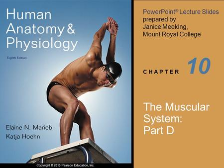 PowerPoint ® Lecture Slides prepared by Janice Meeking, Mount Royal College C H A P T E R Copyright © 2010 Pearson Education, Inc. 10 The Muscular System: