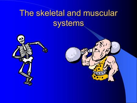 The skeletal and muscular systems Bones and muscles The bones in the body form the skeletal system. This provides a framework for the body. This framework.