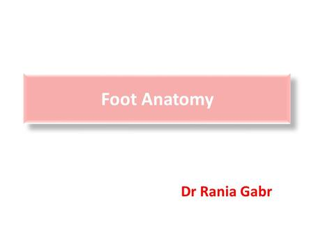 Foot Anatomy Dr Rania Gabr. Objectives Know the retinaculae around the ankle and their relations. Discuss the characteristic features of joints of foot.