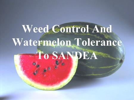 Weed Control And Watermelon Tolerance To SANDEA. Herbicides Labeled for Watermelons 1.Gramoxone,Boa (paraquat)…..…Preplant, Row Middles 2.Roundup, others.