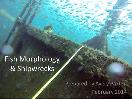 Fish Morphology & Shipwrecks Prepared by Avery Paxton February 2014.