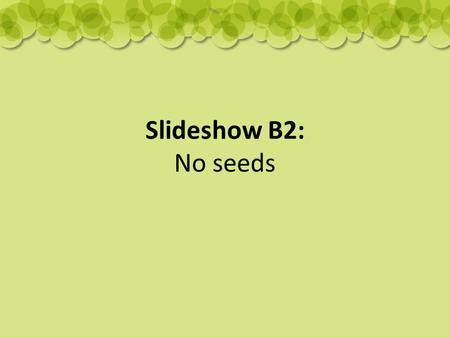 Slideshow B2: No seeds. Strawberry runners: Some plants can make new plants by sending out runners. plantlet runner.