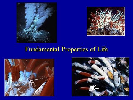 Fundamental Properties of Life