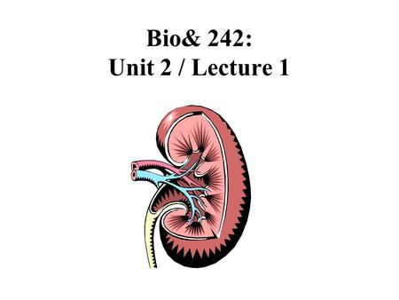 Bio& 242: Unit 2 / Lecture 1. Major Functions of the Kidneys and the Urinary System 1.Regulation of blood ionic composition 2.Maintenance of blood osmolarity.