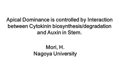Apical Dominance is controlled by Interaction between Cytokinin biosynthesis/degradation and Auxin in Stem. Mori, H. Nagoya University.