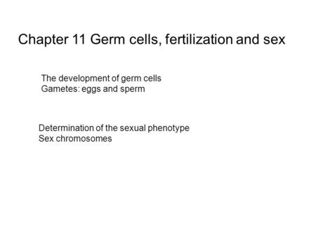 Chapter 11 Germ cells, fertilization and sex The development of germ cells Gametes: eggs and sperm Determination of the sexual phenotype Sex chromosomes.