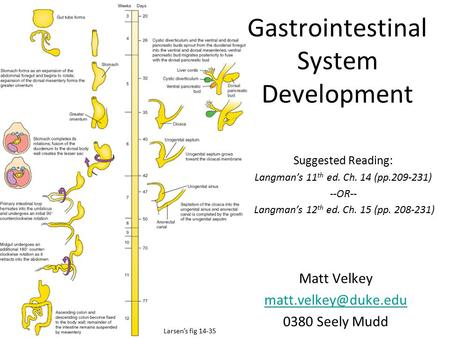 Gastrointestinal System Development