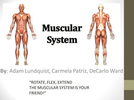 "By: Adam Lundquist, Carmela Patriz, DeCarlo Ward ""ROTATE, FLEX, EXTEND THE MUSCULAR SYSTEM IS YOUR FRIEND!"""