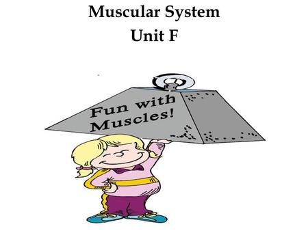 Muscular System Unit F.