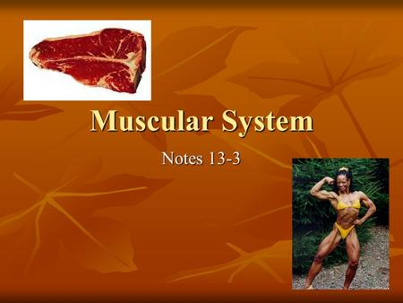 Muscular System Notes 13-3. Muscular System has many functions: Movement Movement Body temperature Body temperature Posture Posture Food source Food source.