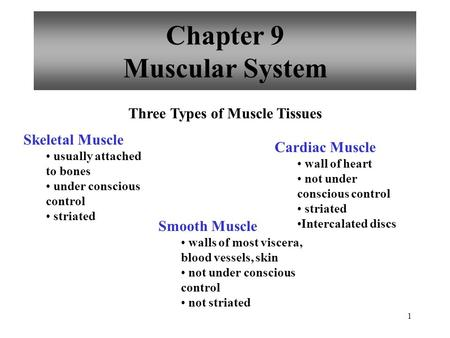 1 Chapter 9 Muscular System Three Types of Muscle Tissues Skeletal Muscle usually attached to bones under conscious control striated Smooth Muscle walls.