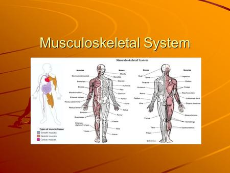 Musculoskeletal System. Common names Vocabulary Lesson 2 1. skeleton – the framework of connected bones in your body 2. bone – is an organ of the skeletal.