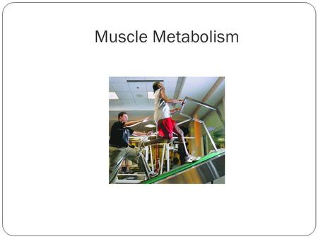 Muscle Metabolism. Goals: Describe three ways in which ATP is regenerated during muscle contraction Relate the oxygen deficit to causes of muscle fatigue.