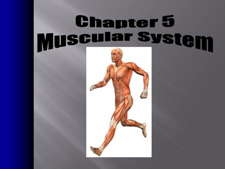 Chapter 5 Muscular System.