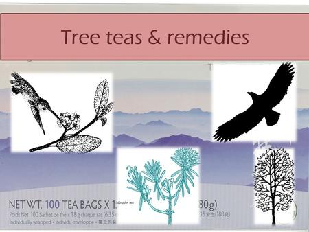 Tree teas & remedies. Angiosperms Gymnosperms.