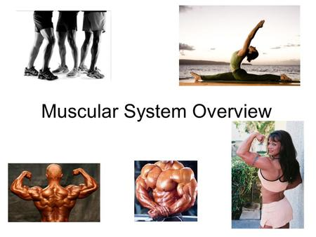Types of Muscle Skeletal – striated & voluntary