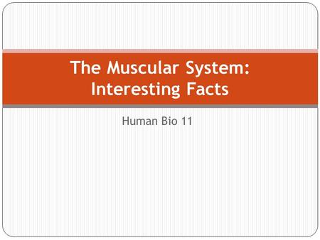 The Muscular System: Interesting Facts