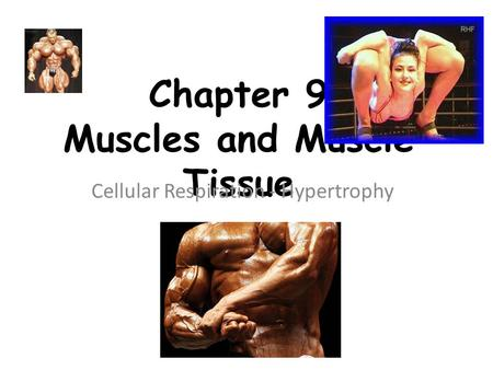 Chapter 9 Muscles and Muscle Tissue Cellular Respiration - Hypertrophy.