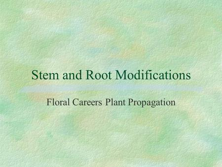 Stem and Root Modifications Floral Careers Plant Propagation.