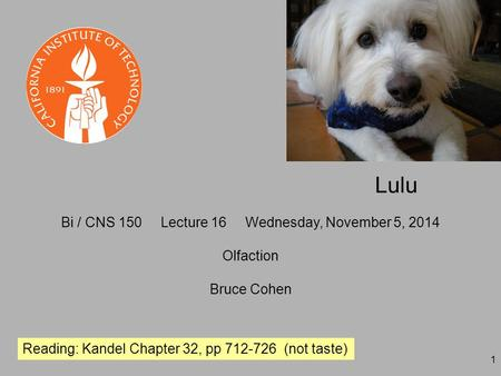 1 Bi / CNS 150 Lecture 16 Wednesday, November 5, 2014 Olfaction Bruce Cohen Reading: Kandel Chapter 32, pp 712-726 (not taste) Lulu.