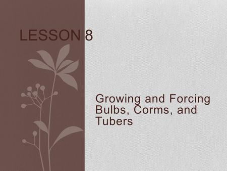 Growing and Forcing Bulbs, Corms, and Tubers LESSON 8.