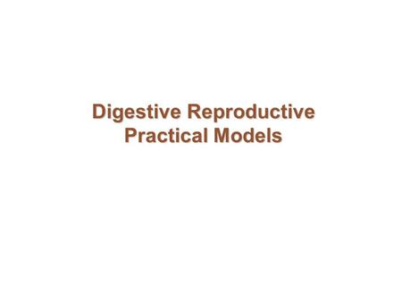 Digestive Reproductive Practical Models