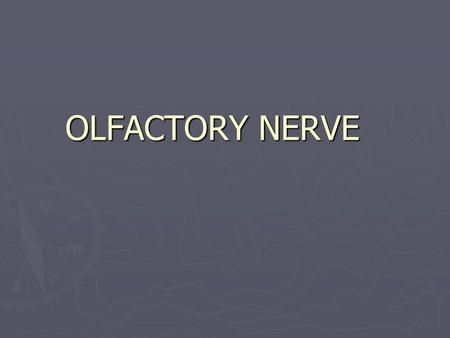 OLFACTORY NERVE. Introduction ► First cranial nerve ► One of the two cranial nerves which doesn ' t course through the posterior fossa ► Only neurons.
