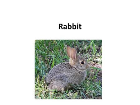 Rabbit. The male is called a buck and the female is a doe a young rabbit is a kitten or kit. Rabbit habitats include meadows, woods, forests, grasslands,
