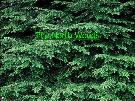 The North Woods #7. Our present day north woods got their first start after the last glacial period about 12,000 years ago.