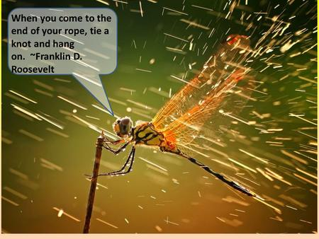 When you come to the end of your rope, tie a knot and hang on. ~Franklin D. Roosevelt.