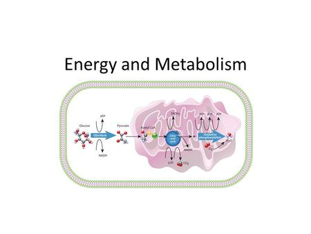 Energy and Metabolism. Metabolism The Sum of all chemical reactions in the body Biochemical Pathway A series of enzyme-catalyzed chemical reactions starting.