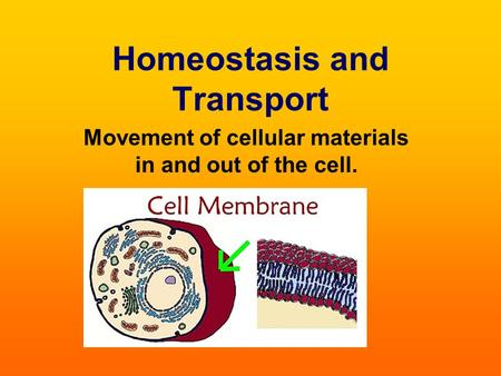 Homeostasis and Transport Movement of cellular materials in and out of the cell.