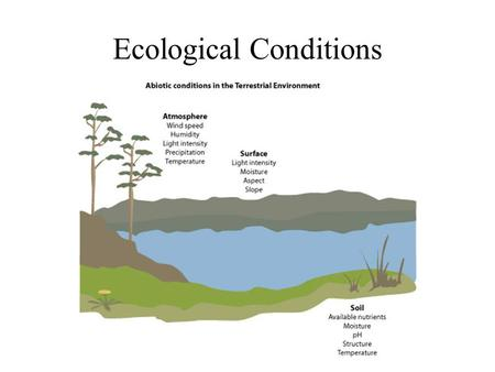Ecological Conditions. Summary of the effects of conditions on species distributions Lethal conditions may limit distributions but they only need to occur.