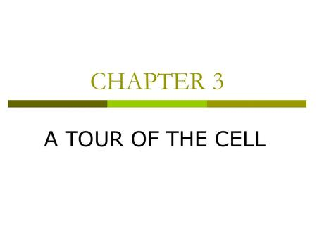 CHAPTER 3 A TOUR OF THE CELL. Concept 3.3: CELL MEMBRANE.