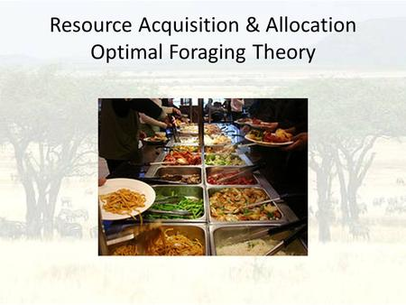 Resource Acquisition & Allocation Optimal Foraging Theory.