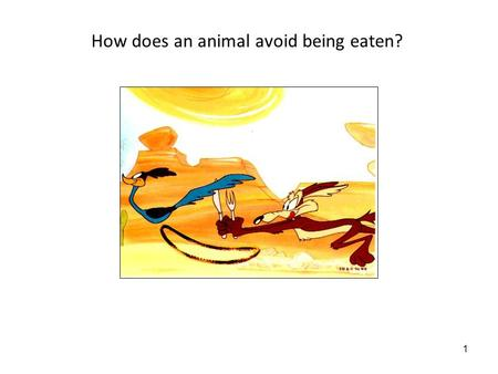 1 How does an animal avoid being eaten?. 2 5/27/08: Behavioral adaptations for survival Lecture objectives: 1.Be able to generate hypotheses and predictions.