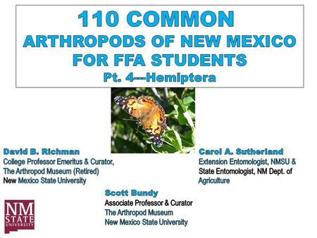 Order Hemiptera Earlier editions of '100 Common Insects of New Mexico' showed two Orders---Hemiptera AND Homoptera More recent studies of these Orders.