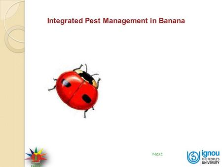 Integrated Pest Management in Banana Next. Integrated Pest Management in Banana Biocontrol is the reduction of disease producing activity of a pathogen.